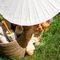 тайские зонты на свадьбу