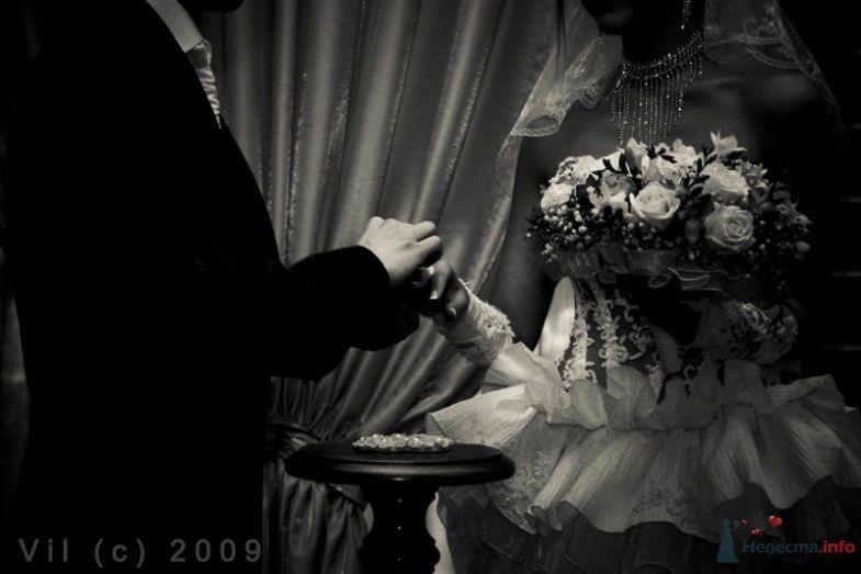 Фото 39351 в коллекции Мои фотографии - azbukaz
