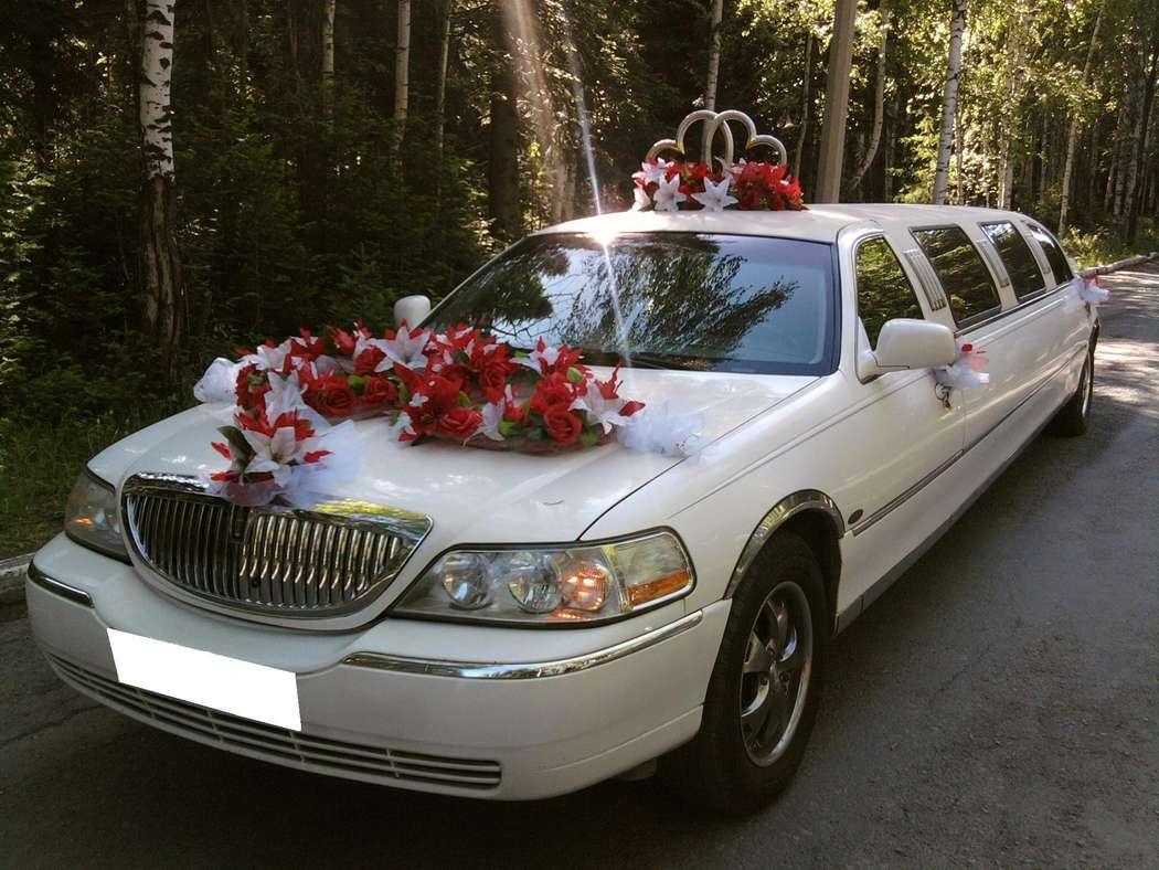фото фото лимузины для свадьбы вислоухая кошка характер
