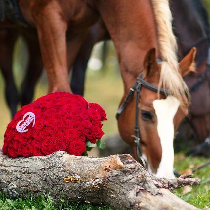 "Аренда лошади - пакет ""Принц на коне"", 1 час"