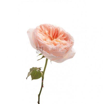Букеты из пионовидных роз