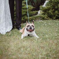 Свадебный день Полина & Максим фотограф: Мария Котлярова  896 496 78 604