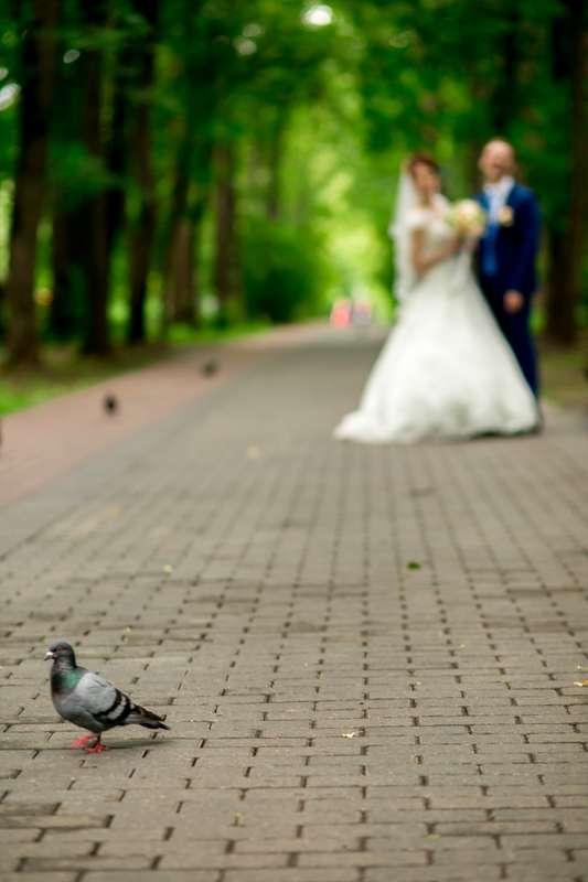заказ съемки вашей свадьбы 89851660401  - фото 12732632 Anna Popstudio - фотосъёмка