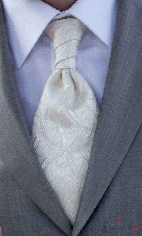 галстук - фото 40713 Olen'4ik
