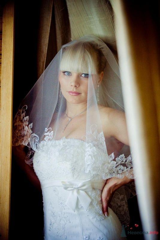 Фото 64323 в коллекции Мои фотографии - Liska
