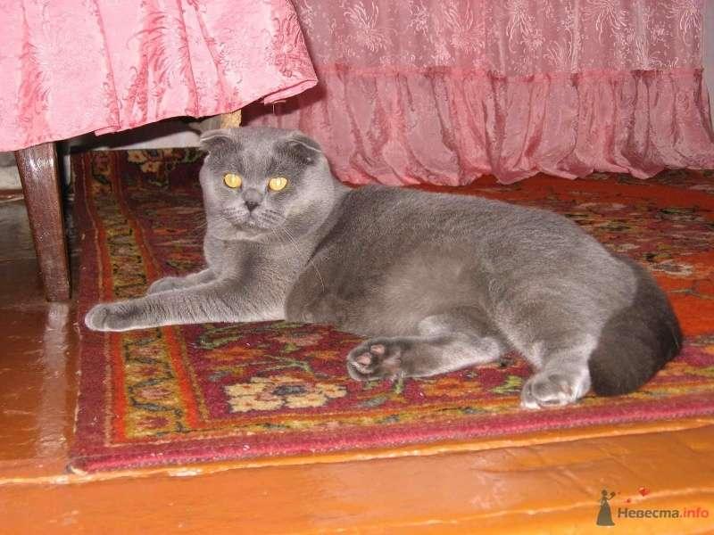 Фото 46821 в коллекции Мои фотографии - Tigra.