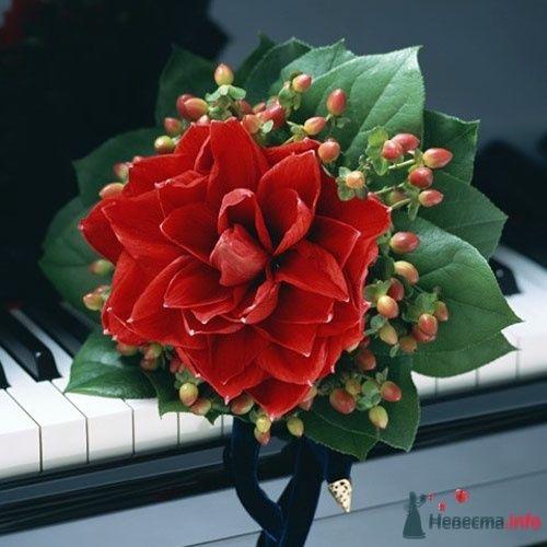 Фото 50589 в коллекции Цвяточки!  - Вашкетова Юлия - организатор свадеб, флорист.