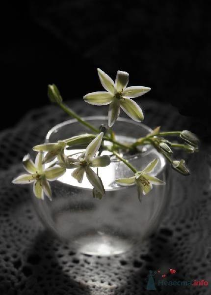 Фото 51869 в коллекции Цвяточки!  - Вашкетова Юлия - организатор свадеб, флорист.
