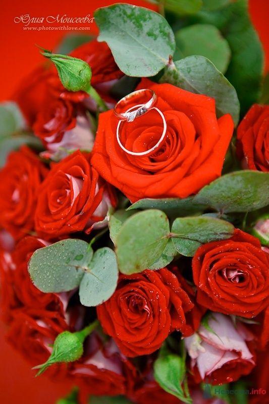 свадьба в яхтклубе - фото 61580 Свадебный фотограф Моисеева Юлия