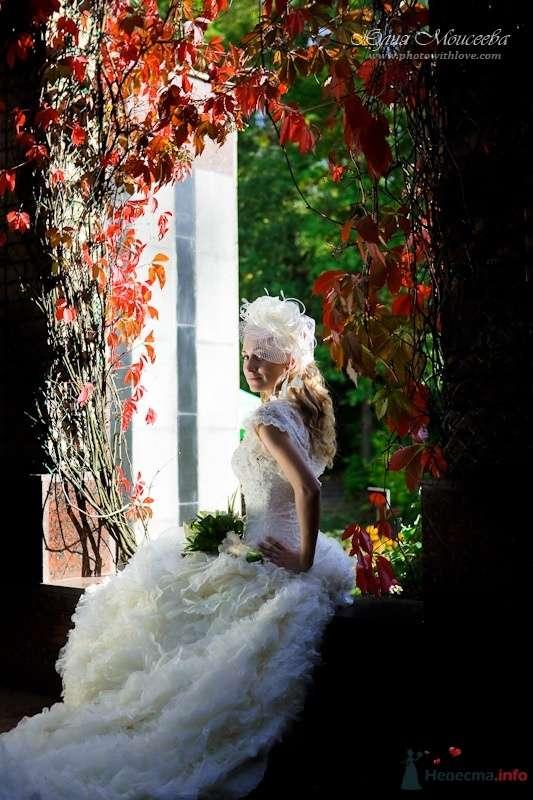 Фотограф Моисеева Юлия - фото 62544 Свадебный фотограф Моисеева Юлия