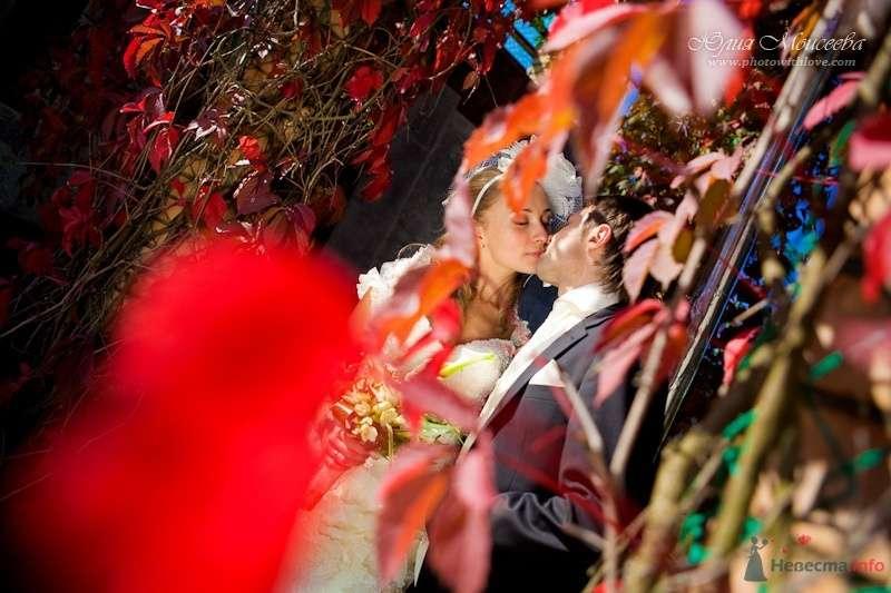 свадебное фото  - фото 62550 Свадебный фотограф Моисеева Юлия