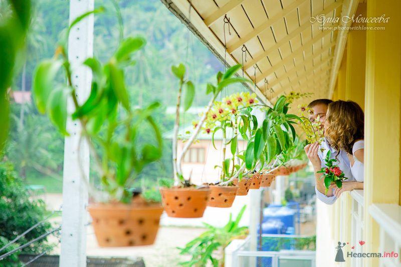 орхидеи - фото 80345 Свадебный фотограф Моисеева Юлия