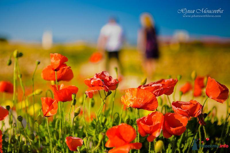Фото 92281 в коллекции Свадьба на Кипре