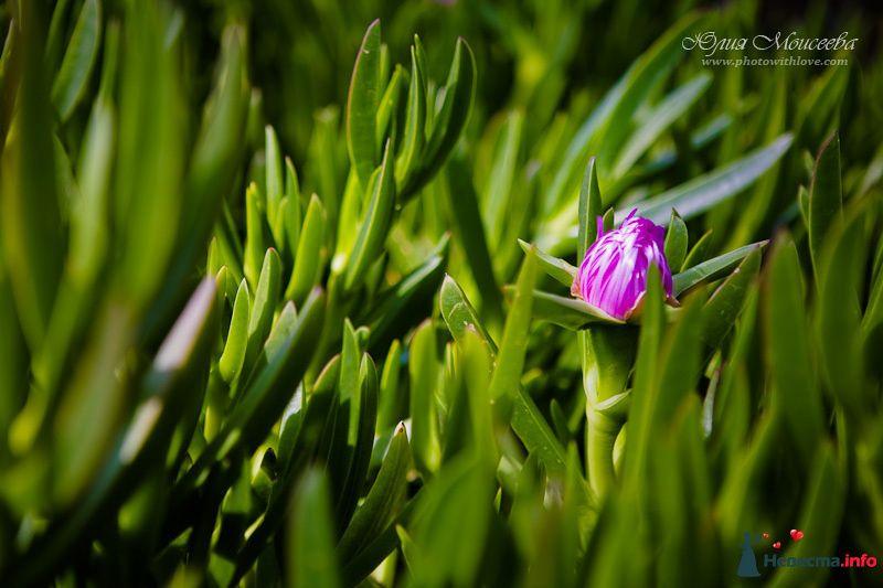 необычные цветы - фото 95806 Свадебный фотограф Моисеева Юлия