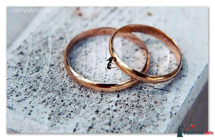 Фото 122789 в коллекции Свадьбы - Фотограф Таня Якуб