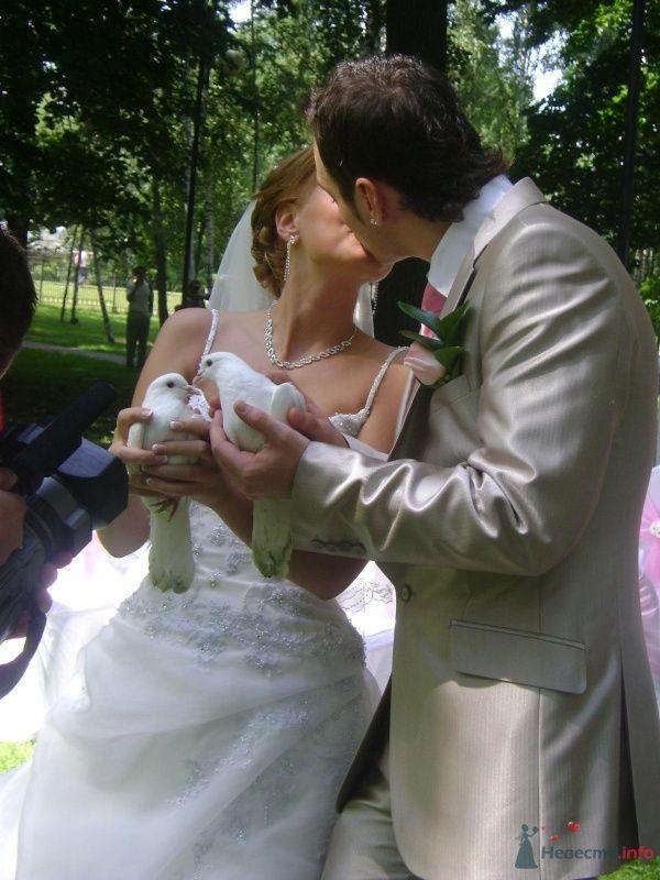 Фото 51245 в коллекции Свадьба - любительские фото