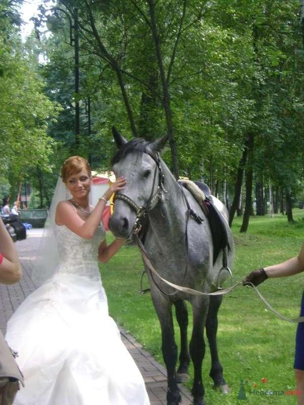 Фото 51247 в коллекции Свадьба - любительские фото - Мissis Kейт