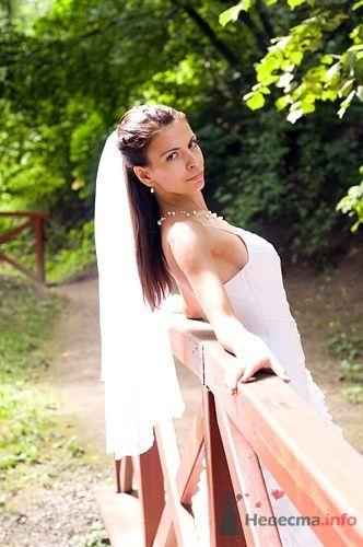 Фото 39325 в коллекции Мои фотографии - Андрей Смоляков
