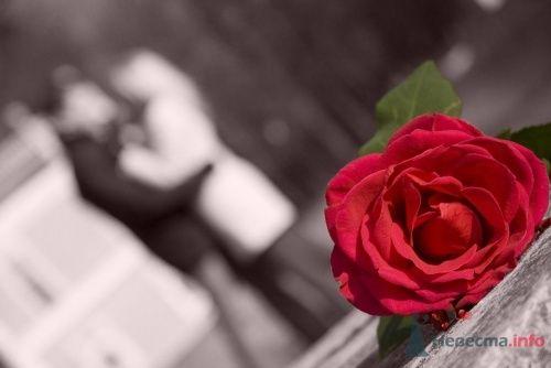 Фото 7688 Невеста01
