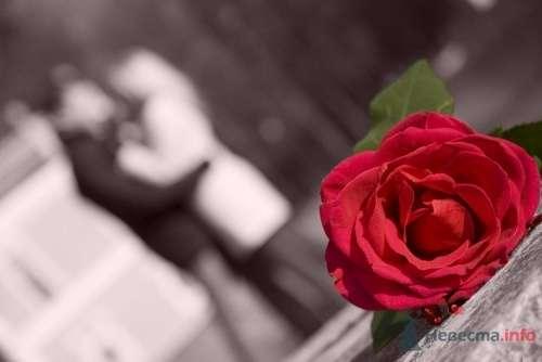 Фото 7688 - Невеста01