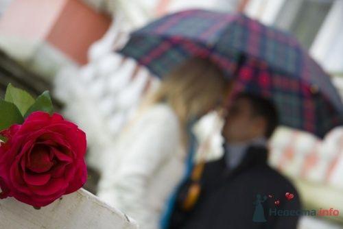 Фото 7704 - Невеста01