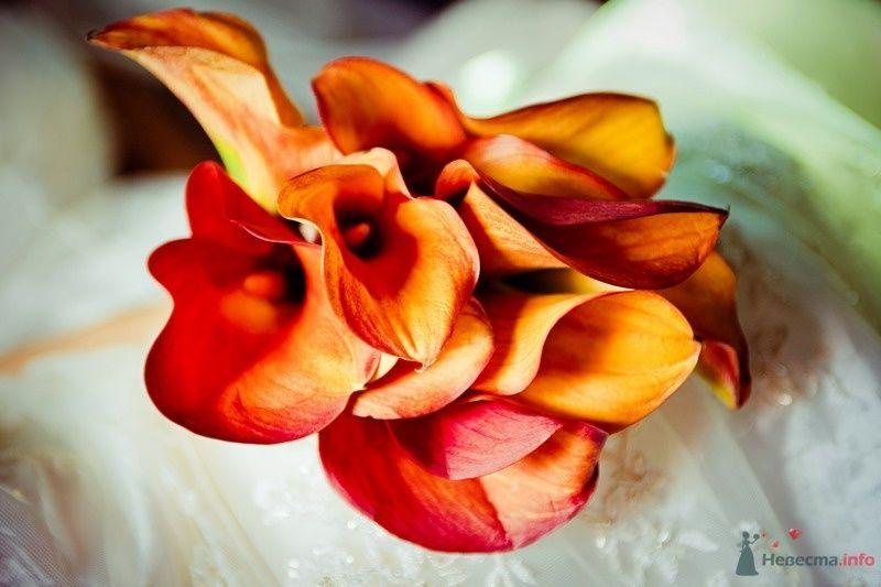 Букет невесты из оранжево-красных калл - фото 61766 yanechka