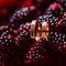 свадебные кольца в ежевике