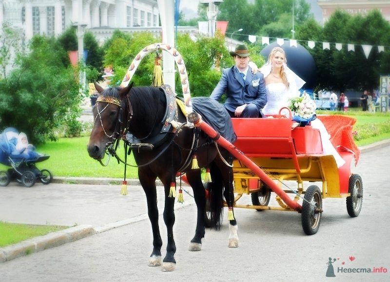 Красная карета, запряженная черной лошадью с молодоженами в ней. - фото 49360 Аделя Хильман