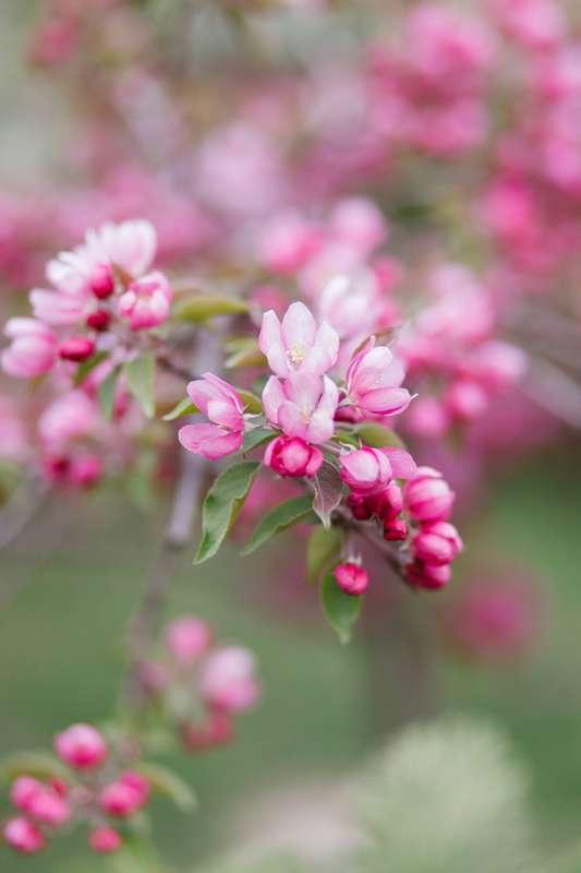 Фото 16477712 в коллекции Фотосессия в саду - Love Decor - свадебный декор