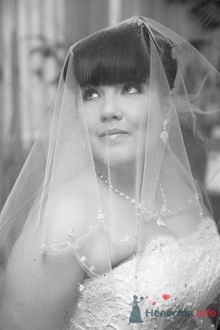 Фото 61833 в коллекции Как Кошка замуж выходила 08.01.2010 - Koshka_Lu