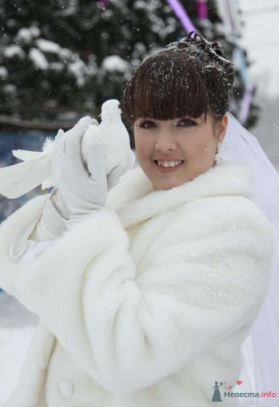 Фото 68402 в коллекции Как Кошка замуж выходила 08.01.2010 - Koshka_Lu