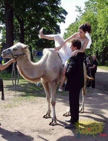 Фото 57211 в коллекции мои фотографии - Свадебный распорядитель Ольга Фокс