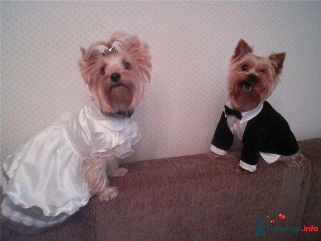 Фото 82029 в коллекции мои фотографии - Свадебный распорядитель Ольга Фокс