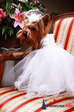 Фото 82032 в коллекции мои фотографии - Свадебный распорядитель Ольга Фокс