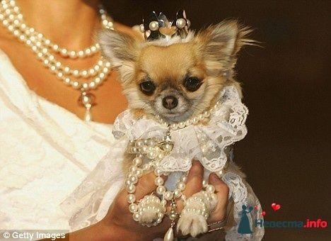 Фото 82034 в коллекции мои фотографии - Свадебный распорядитель Ольга Фокс