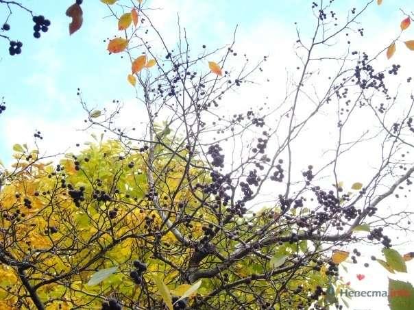 плодовые деревья в парке 50летия октября - фото 53994 Logika