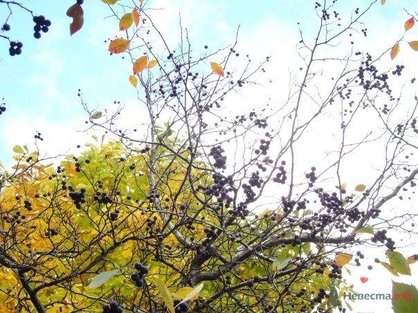 плодовые деревья в парке 50летия октября