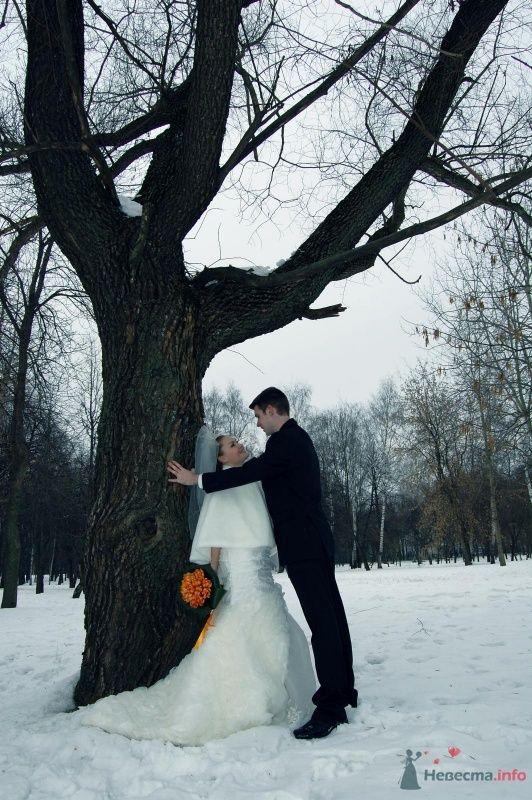 """Фото 25071 в коллекции """"Сквозь тернии к звёздам"""" - наша свадьба состоялась! :) - Minutka"""