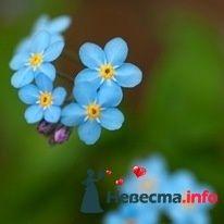 Фото 135940 в коллекции Мои фотографии - Shysha