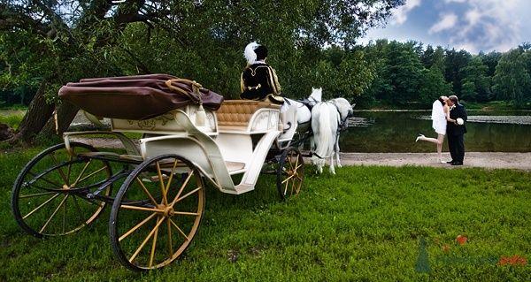 Белая карета с парой лошадей и кучером, на фоне зелени парка и