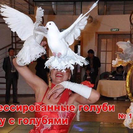 Выступление танцоров, 5-10 минут