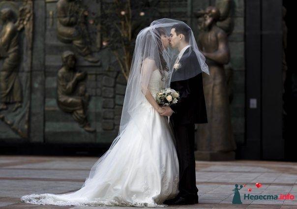 Фото 111251 в коллекции Wedding - Oktava