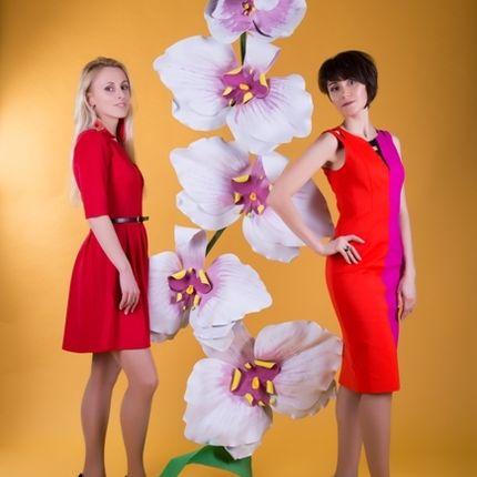 Орхидея в аренду