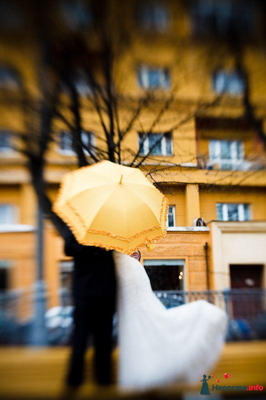 Фото 117612 в коллекции Мои фотографии - VOLKODAVVNV