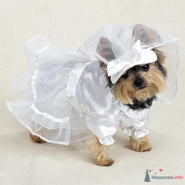 Самая верная из подружек невесты :)