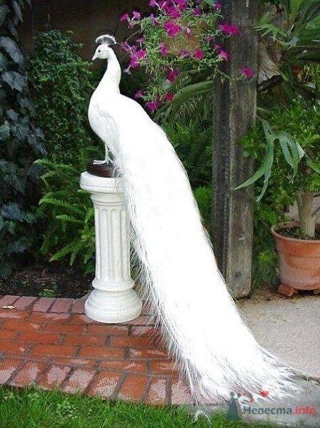 Фото 67032 в коллекции Птицы - вечные невесты - Incognito