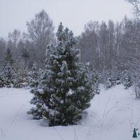 Зима, декабрь