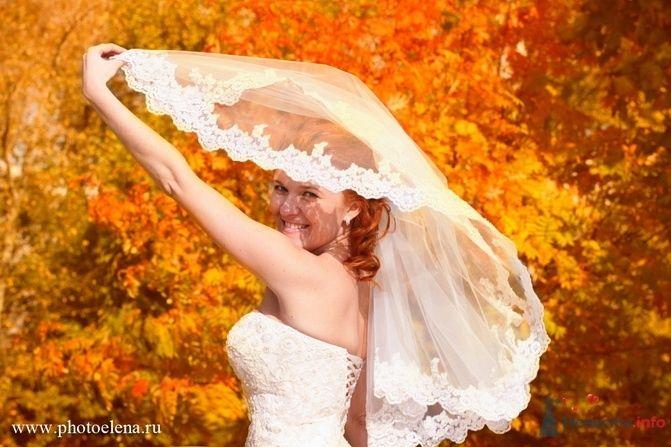 Фото 54584 в коллекции свадьба - Photoelena - видео и фото