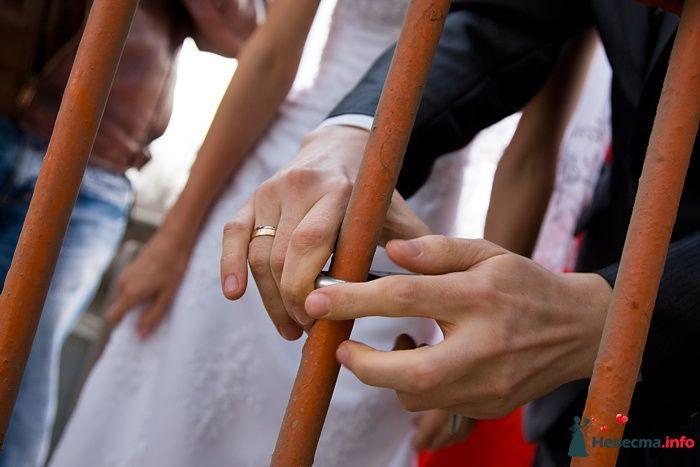 Фото 94105 в коллекции Свадьба 16.04.2010 - Дарьяночка