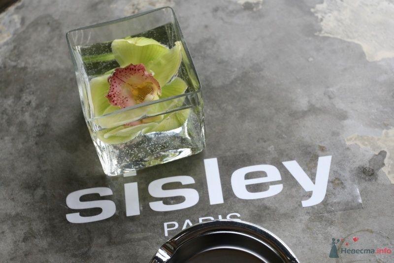 цветок замороженный - фото 63318 disandra